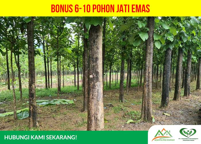 Kavling Jati Indah Transyogi - Bonus 6-10 pohon jati emas